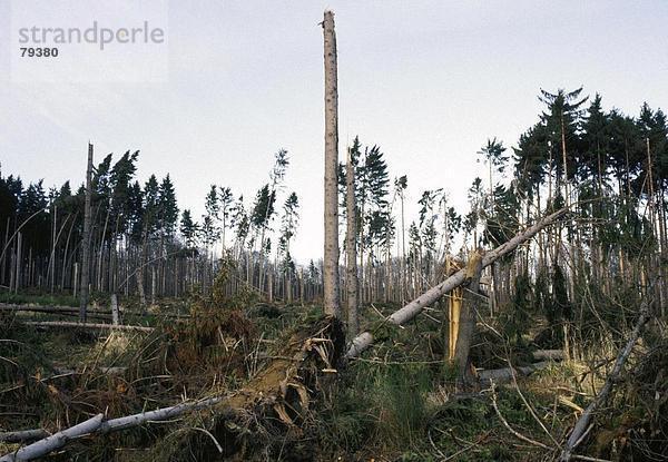 Landschaftlich schön,landschaftlich reizvoll,Umwelt,Sturm,Wald,Natur,Holz,beschädigt,Unglück,Umweltschutz,Klima