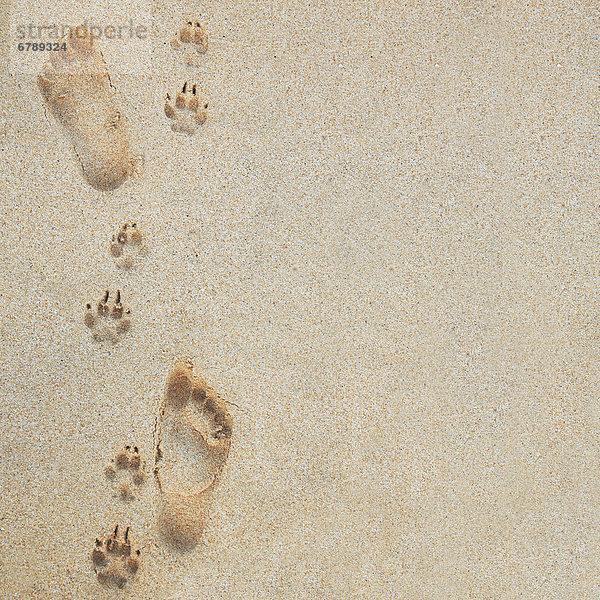 Hawaii, Oahu, Fußabdrücke und Pawprints im Sand.