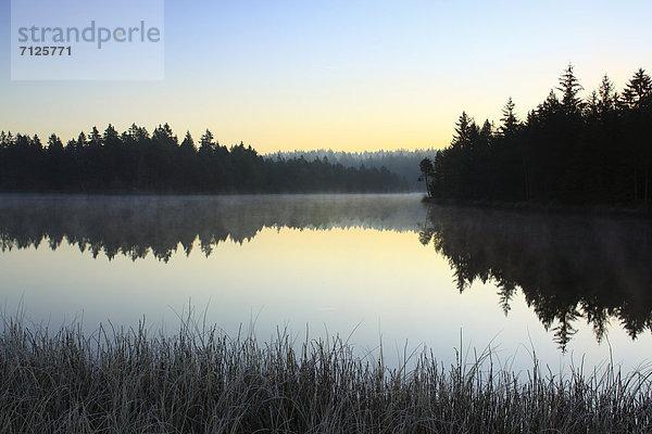 Naturschutzgebiet,Wasser,Morgen,Baum,Schutz,Sonnenaufgang,Spiegelung,Wald,See,Natur,Nebel,Holz,Fichte,Tanne,Abenddämmerung,Moor,Schweiz,Dämmerung,Nebelfelder