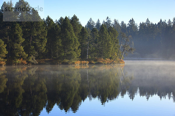 Naturschutzgebiet,Wasser,Morgen,Baum,Schutz,Spiegelung,Wald,See,Natur,Nebel,Holz,Fichte,Tanne,Moor,Schweiz,Nebelfelder