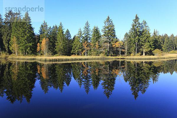 Naturschutzgebiet,Wasser,Baum,Schutz,Spiegelung,Wald,See,Natur,Holz,Birke,Fichte,Tanne,Moor,Schweiz