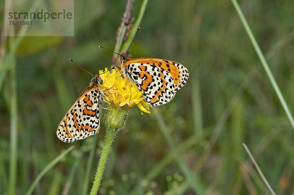 Schutz ,Tier ,weiß ,Wildtier ,Schmetterling ,Insekt ,Punkt ,Ethnisches Erscheinungsbild,Schutz ,Tier ,weiß ,Wildtier ,Schmetterling ,Insekt ,Punkt ,Ethnisches Erscheinungsbild