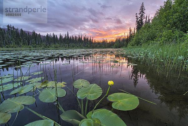 Wasser,Sonnenuntergang,über,See,Bundesstraße,vorwärts,Lilie,British Columbia