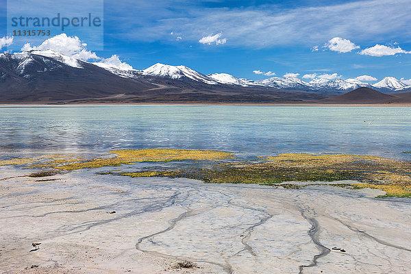 Altiplano,Amerika,Berge,Bolivien,Gewässer,Laguna Blanca