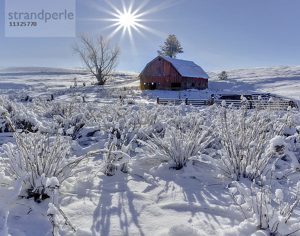 Amerika,Bauernhof,Colfax,Eastern Washington,flüssig,Frühling