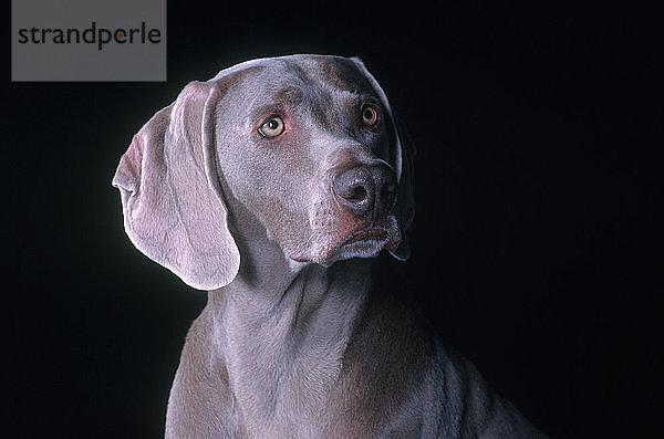 Freundschaft,Haustier,Hund,Jagdhund,Konzept,Landwirtschaft