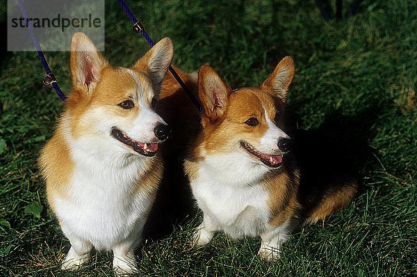 2,Anzahl,Freundschaft,Haustier,Hund,Hütehund