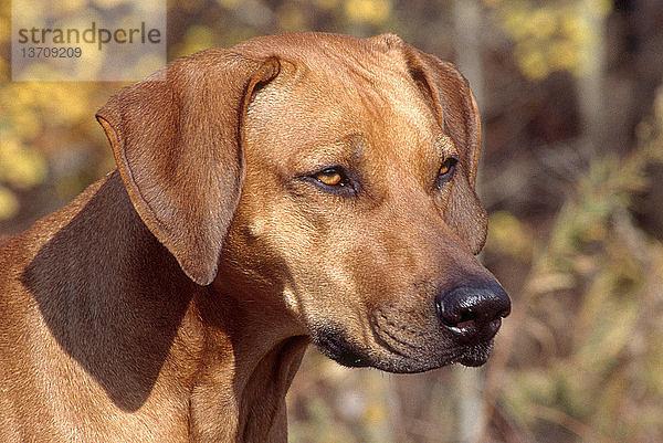 Außenaufnahme,Freundschaft,Haustier,Hund,Jagdhund,Kampfhund