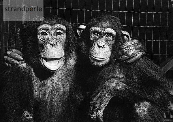 Affe,Freundschaft,Gefangenschaft,Gegenstand,Konzept,Käfig