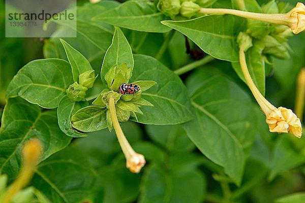 Freund,Freundschaft,Gliederfüßer,Insekt,Konzept,Käfer