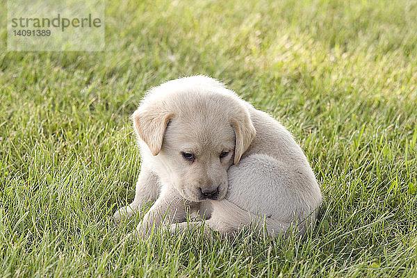 Freundschaft,Gesundheitswesen,Haustier,Hund,Jagdhund,Jungtier
