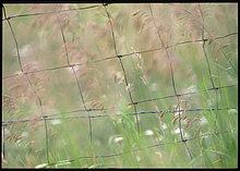 Haferflocke ,nahe ,Wasser ,Tal ,ungestüm ,Zaun ,Metalldraht