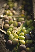 Korb ,grün ,schwarz ,Olive