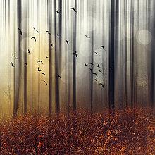 Vogelschwarm im Herbstwald, digital manipuliert